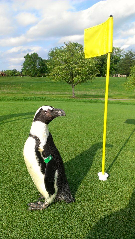 green-bean-on-golf-course.jpg